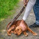 Maltraitance des animaux : que faire et qui contacter ?