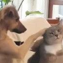 Un chien entrain de caresser un chat a ému les internautes (vidéo)