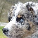 Les chiens préférés des français 2018 : grand zoom sur le Top 5