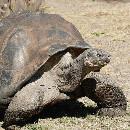 Pourquoi les tortues vivent longtemps ?