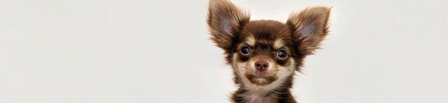 Comparatif des croquettes pour petit chien