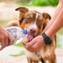 Mon chien ne boit pas, que faire ?