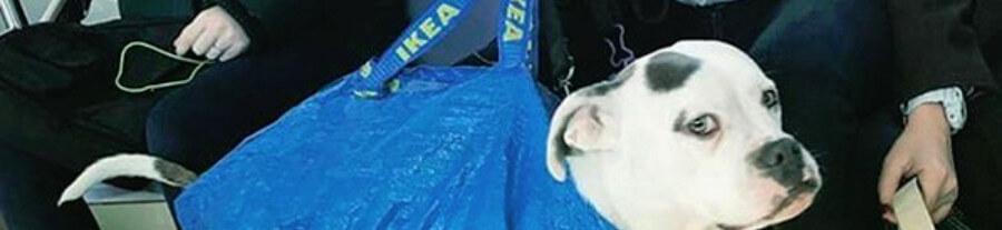 Dans le métro de New-York, photos drôles des chiens en sac
