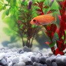 Pompe pour aquarium : comment choisir ?