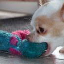 Chien destructeur : comment maîtriser un chien qui détruit tout ?