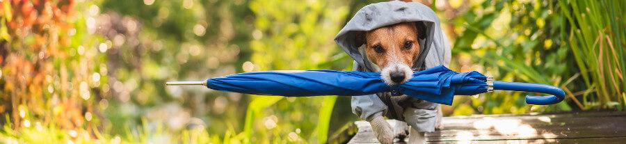 Le comparatif des manteaux d'hiver pour chien