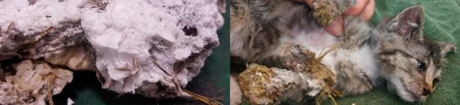 Sauvetage d'un chaton aspergé de mousse et abandonné dans une poubelle