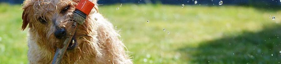 Le chien hyperactif : symptômes et traitement