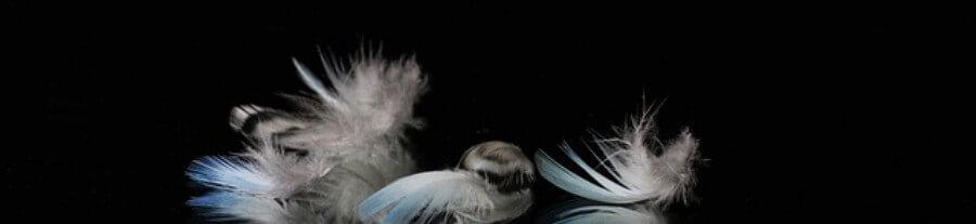 Pourquoi ma perruche perd ses plumes ?