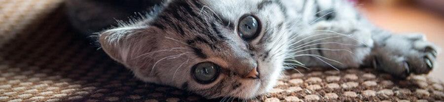 Sécuriser son appartement ou sa maison pour chat