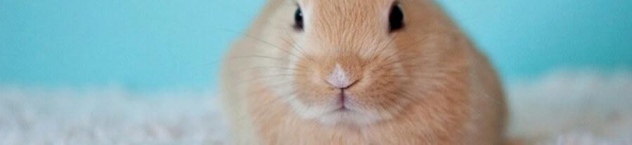 Comprendre le langage du lapin
