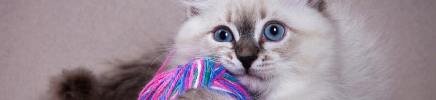 5 choses à ne surtout pas faire avec votre chat
