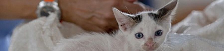 Effets secondaires des vaccins pour chien et chat