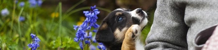 9 conseils pour être écolo quand on a un chien