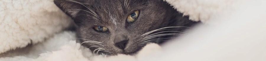 Pourquoi les chats aiment se mettre sous la couette ?
