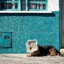 Coronavirus : Les cabinets vétérinaires sont-ils encore ouverts ?