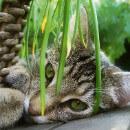 Plantes non toxiques pour le chat