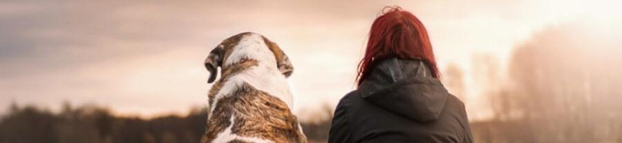 Perdre un animal de compagnie : une souffrance souvent sous-estimée ?