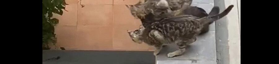 Ce chaton tombe dans les escaliers mais ses amis viennent le secourir