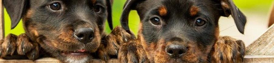 Noms de chiens en R, originaux et stylés