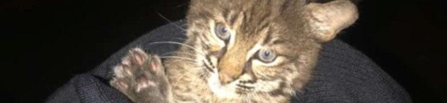 Elle pense recueillir un chaton errant au bord de la route mais il s'agit d'un tout autre animal