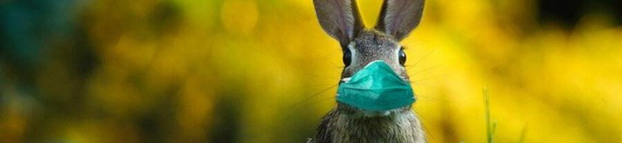 Mon lapin ronge tout : comment réagir ?
