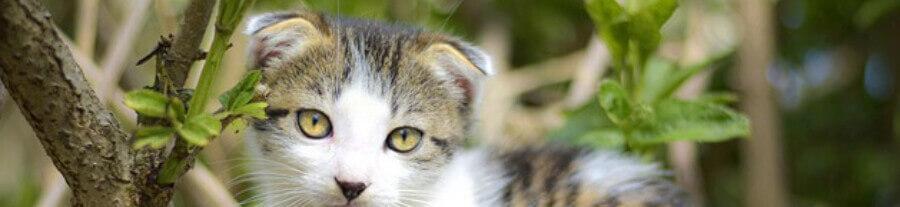 Comprendre le langage des oreilles de votre chat