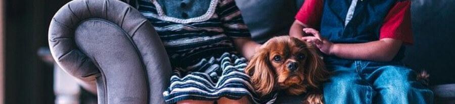Races de chien qui supportent la solitude