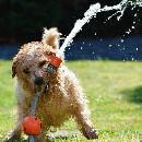 Comment rafraîchir son chien en été ?