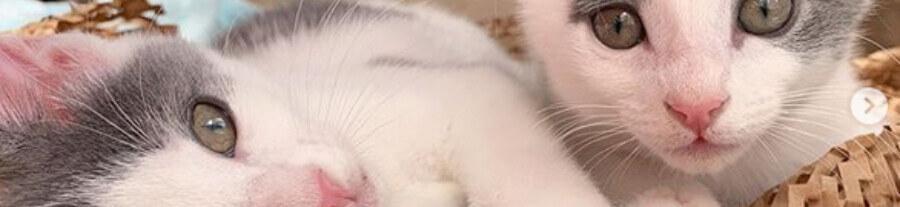 Sauvés de justesse, ces chatons jumeaux sont inséparables