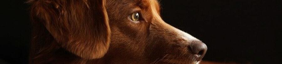 De quoi les chiens ont-ils peur ?