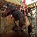 Sauvetage dans les Alpes-Martitimes : pourquoi des chevaux tombent dans des piscines ?