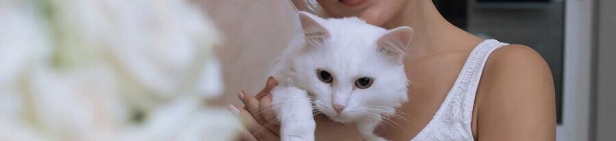 Comment le chat choisit-il son maître ?