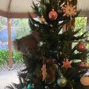 Une famille australienne trouve un koala perché sur l'arbre de Noël