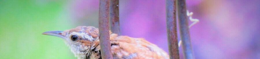Mon oiseau a peur de moi : que faire ?