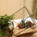 Comment créer un terrarium tropical ?