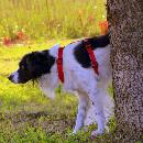 Empêcher un chien d'uriner sur le gazon : comment faire ?