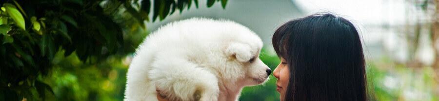 L'âge d'un chien vs âge humain : comment évaluer l'équivalence ?