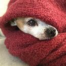 Comment protéger son chien du froid ?