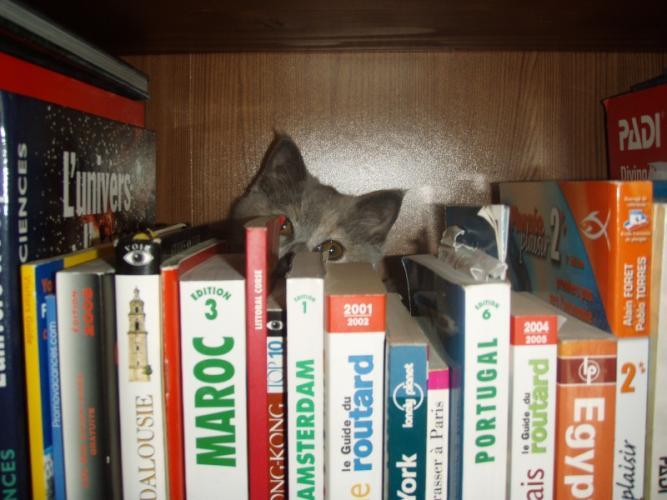 chat dort derrière livres