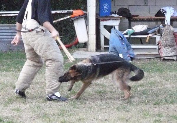 photo pratique ring avec chien