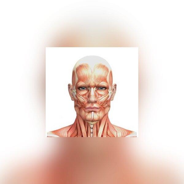 Prova Anatomia 1.jpg