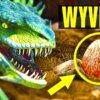 Wyvern Egg Raffle