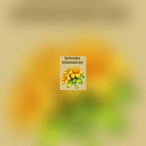 Glühwürmchen-Schein 2 4.jpg