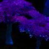 [Forum] L'arbre de fortune maléfique