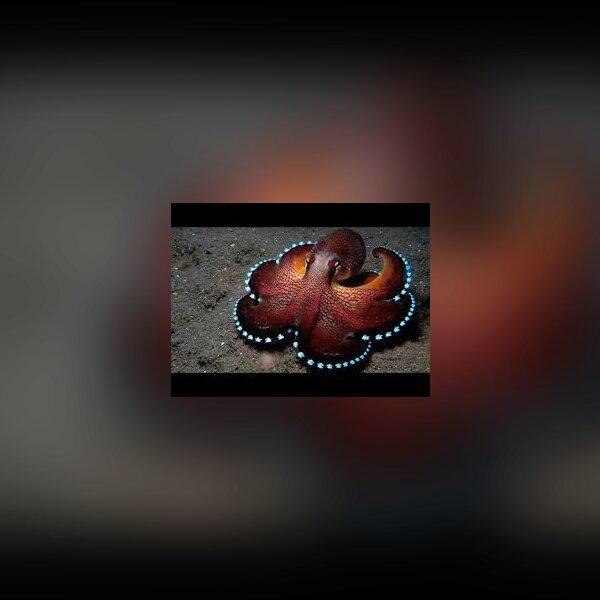 Zoo Tycoon 2 Contest:  Deep Ocean Wonders - img