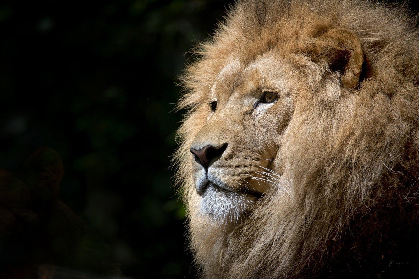 africa-african-animal-33045