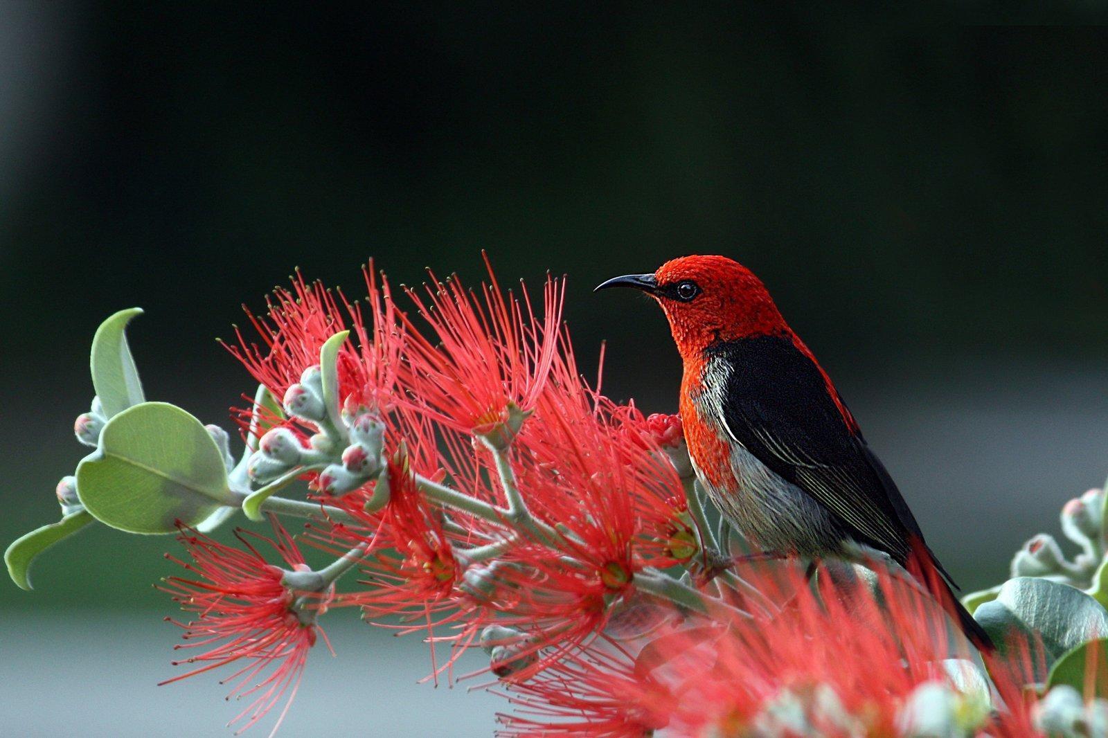 animal-animal-photography-bird-36762