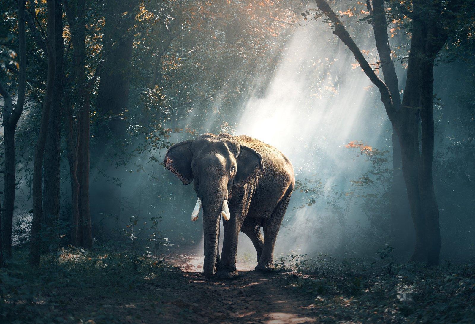 animal-photography-daylight-elephant-247431