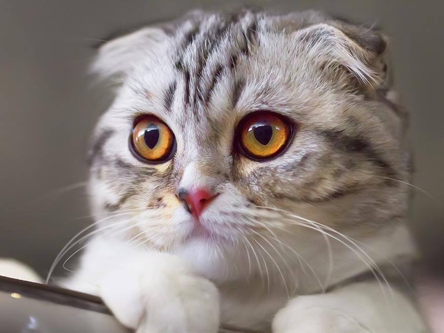soft-eyed-cat